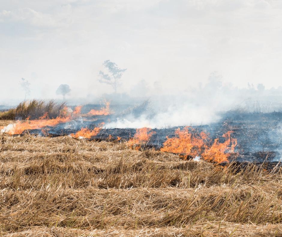 Fire Season 2020